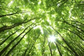 fs_arbres