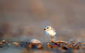 15-us_petit-oiseau