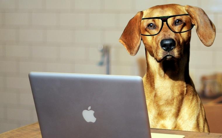 dog-2983021