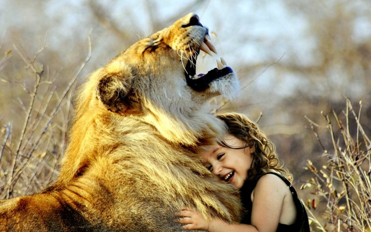 lion-3012515-001
