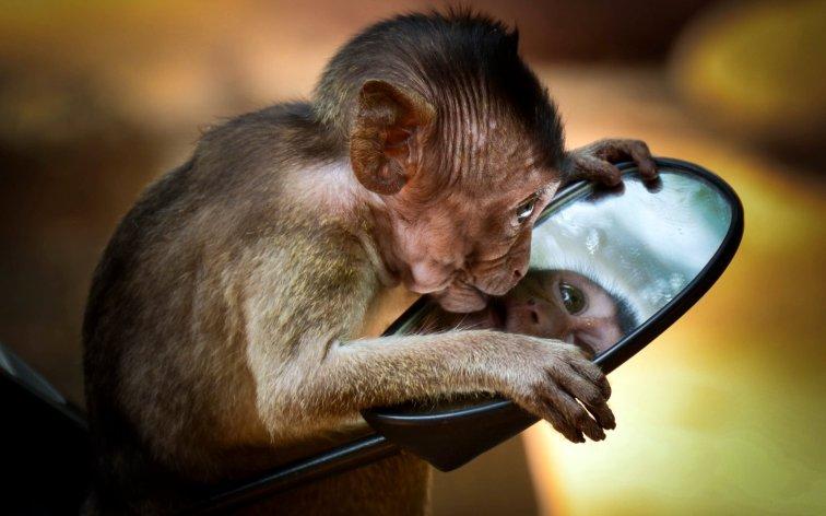 monkey-3626190-002
