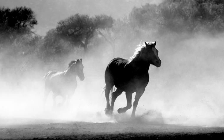 horse-430441