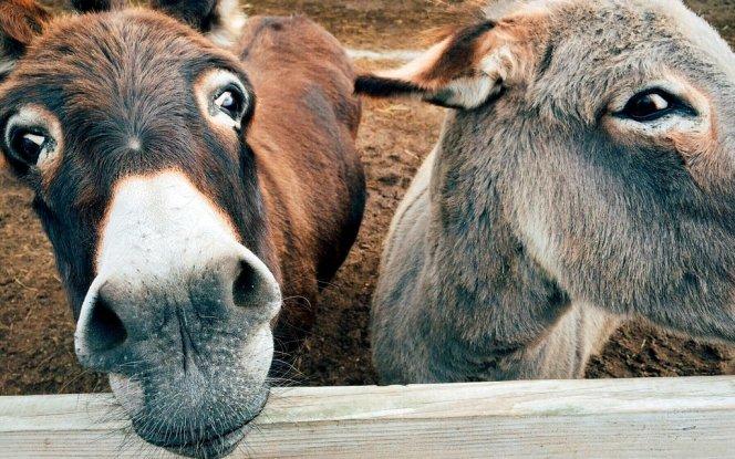 donkey-1725230-001