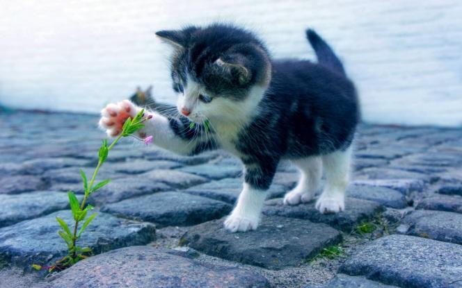 cat-2536662
