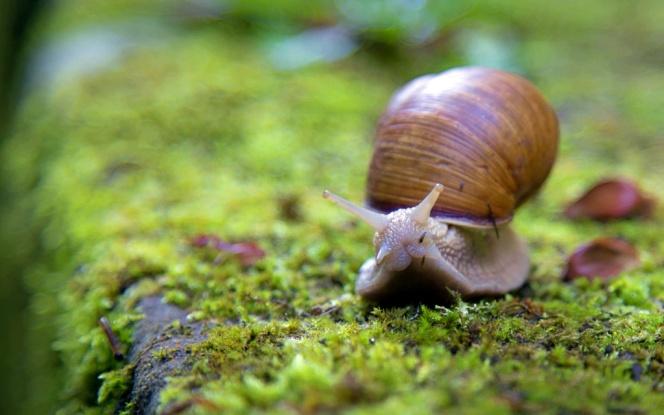 snail-1281633