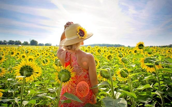 sunflowers-3640935