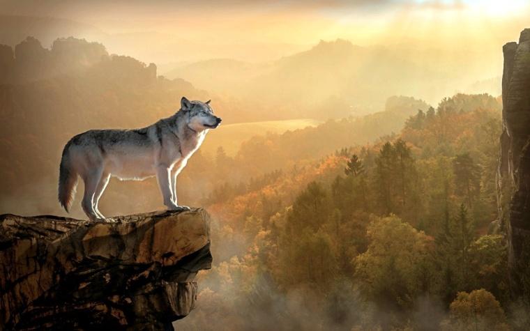 wolf-3158282_1920