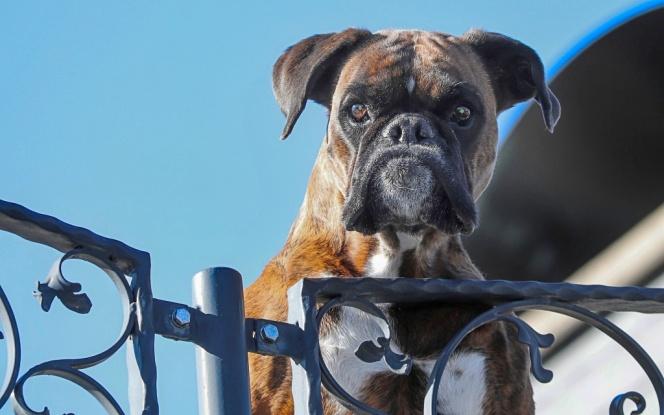 guard-dog-4000952_1920
