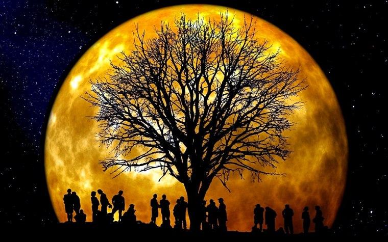 tree-66465_1920