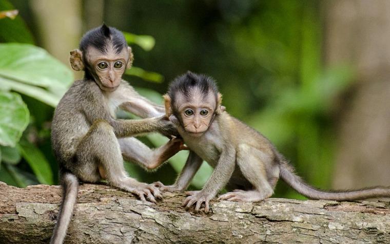 monkeys-768641_1920