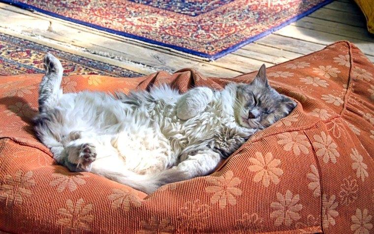 sleeping-cat-4764742_1920