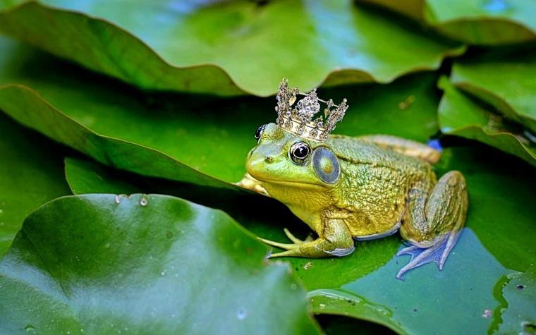 bull-frog-2525989_1920