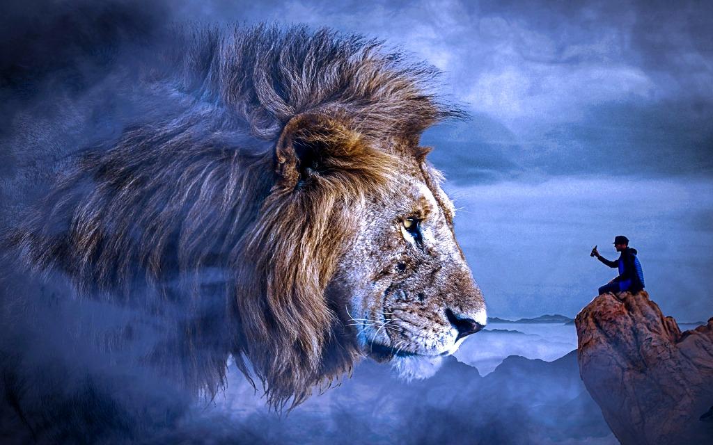 lion-4728270_1920